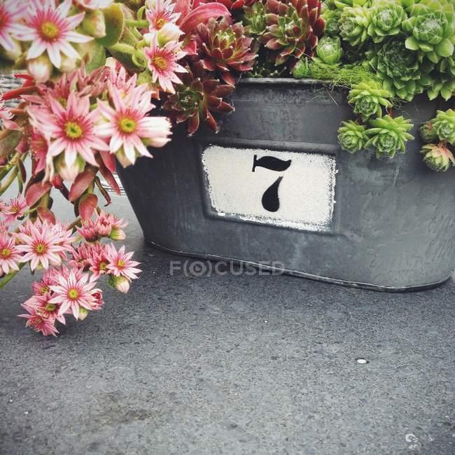 Fioriera in metallo con fiori — Foto stock