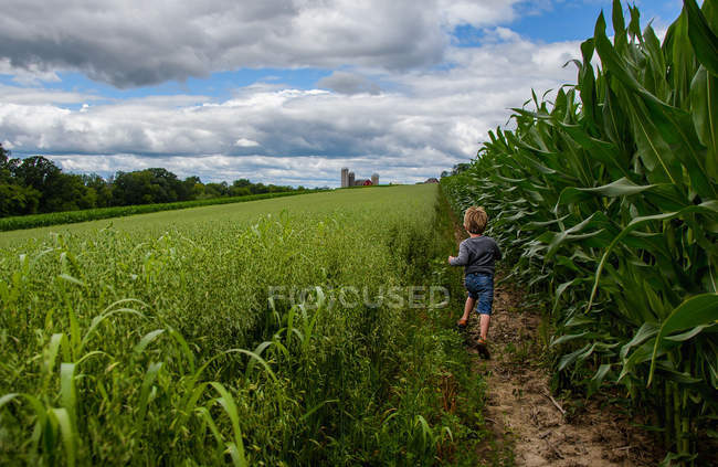 Boy running through corn field — Stock Photo
