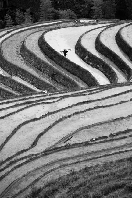 Arrozales en China - foto de stock