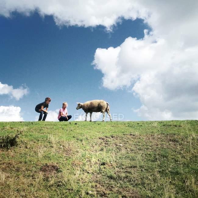 Два маленьких детей с овцами — стоковое фото