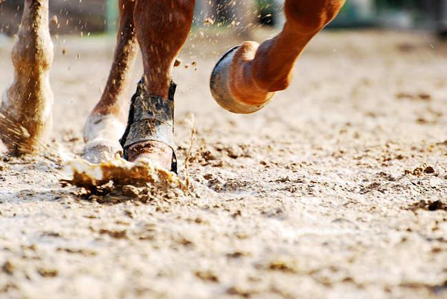 Course de chevaux dans la boue — Photo de stock