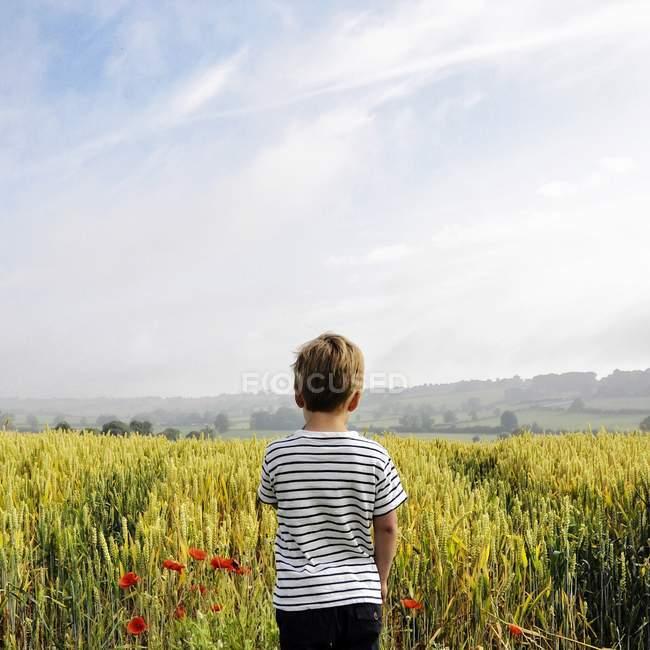 Хлопчик стоїть в пшеничному полі — стокове фото