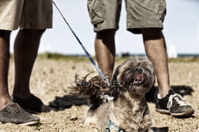 Мужчины, ходьба с собакой — стоковое фото