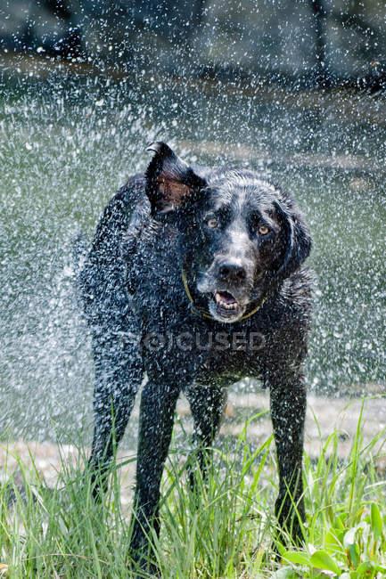 Hund vertrocknet im Gras — Stockfoto