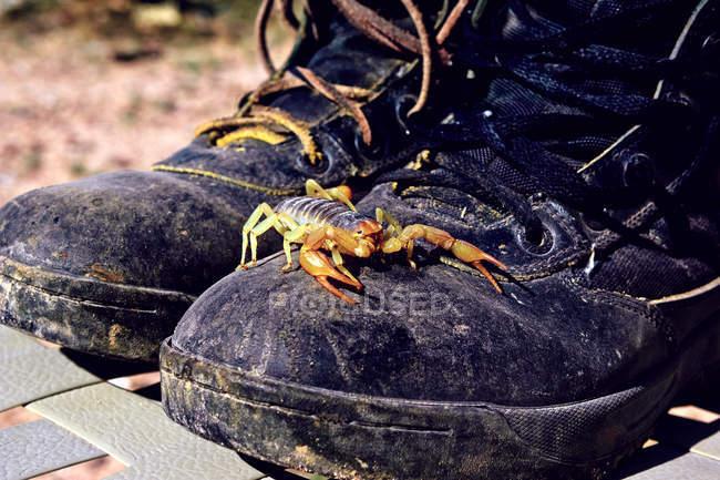 Scorpione Arrampicata su paio di Stivali — Foto stock
