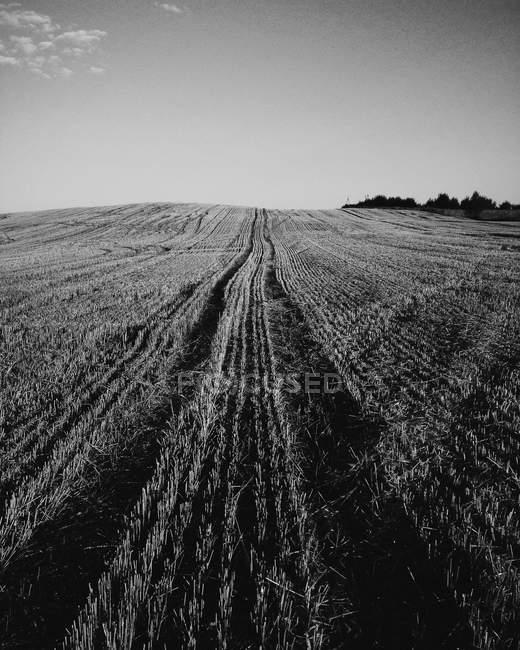 Strada con righe nel campo — Foto stock