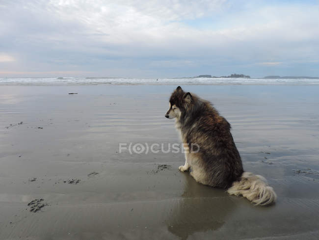 Einsamer Hund sitzt am Strand — Stockfoto