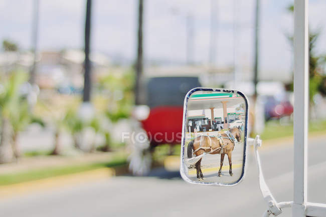 Отражение лошади в зеркале крыла — стоковое фото