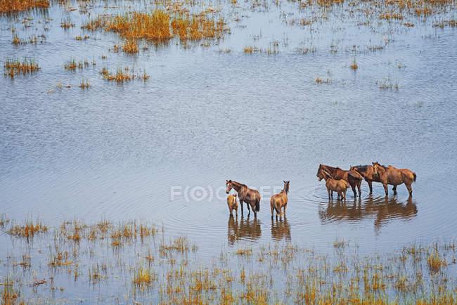 Дикие лошади на влажном поле — стоковое фото