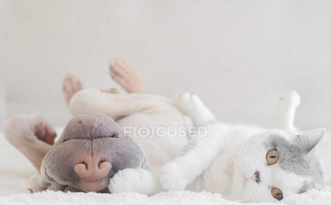 Chat et chien Shar Pei — Photo de stock