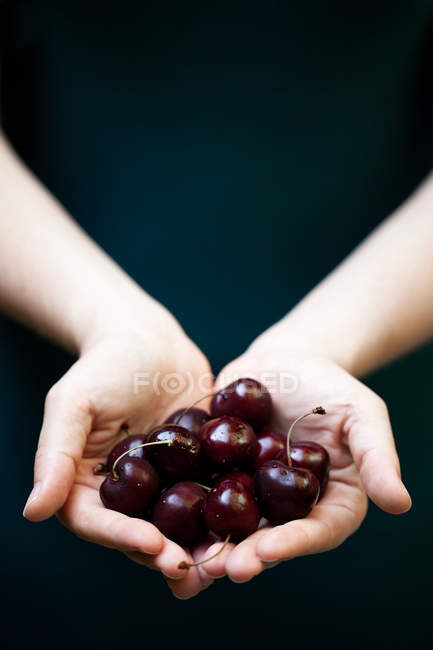 Woman holding cherries in palms — Stock Photo