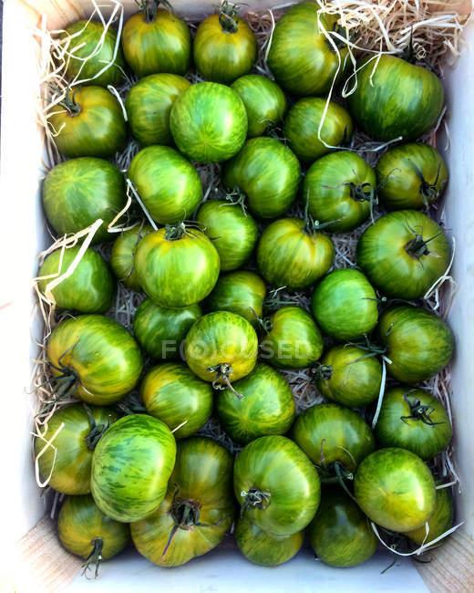 Томаты зеленые Зебра в ящике — стоковое фото