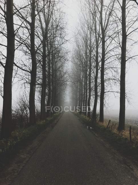 Strada appannata con alberi intorno — Foto stock