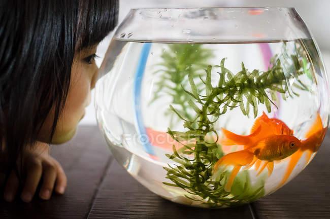 Girl looking at fishbowl — Stock Photo