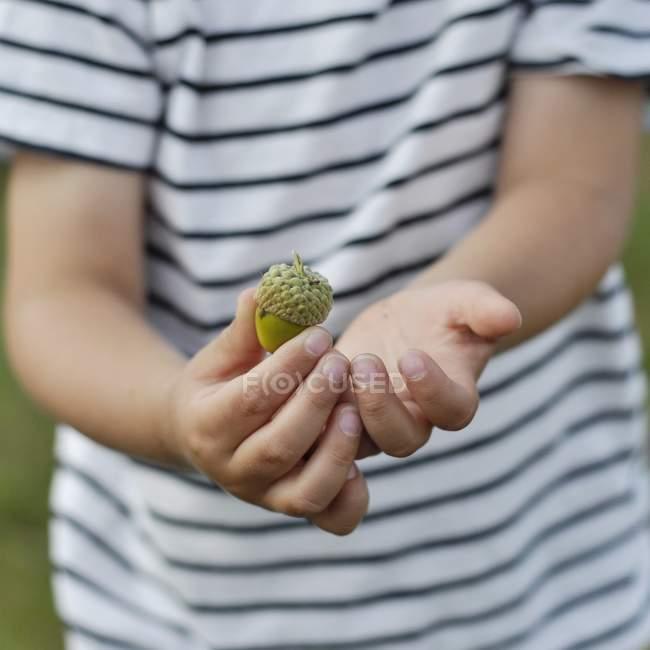Boy holding acorn — Stock Photo