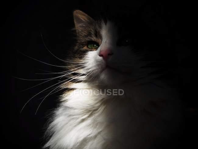 White cat in sun beam — Stock Photo
