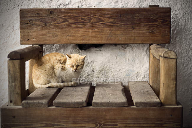 Cat sleeping on chair — Stock Photo