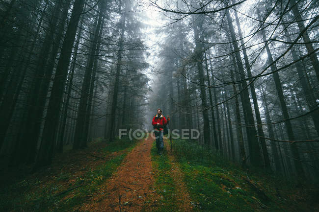 Hiker walking on footpath in forest — Stock Photo