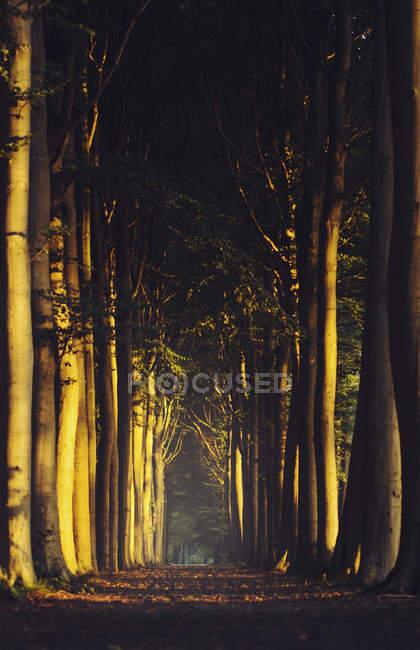 Primeiro sol na floresta de outono — Fotografia de Stock