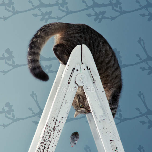 Cat on ladder upside down — Stock Photo