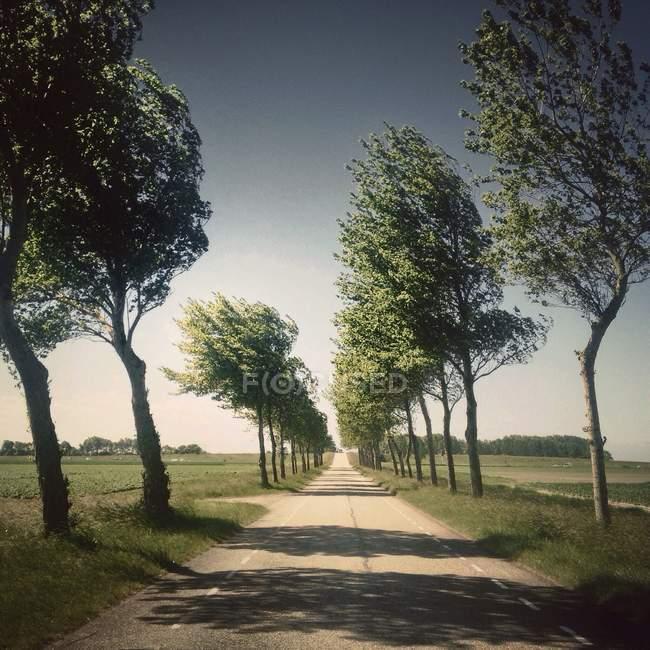 Vista lungo la strada di campagna — Foto stock