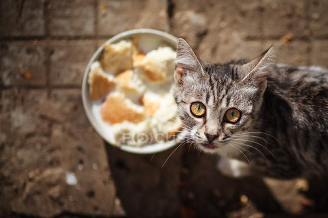 Cat and food bowl — Stock Photo