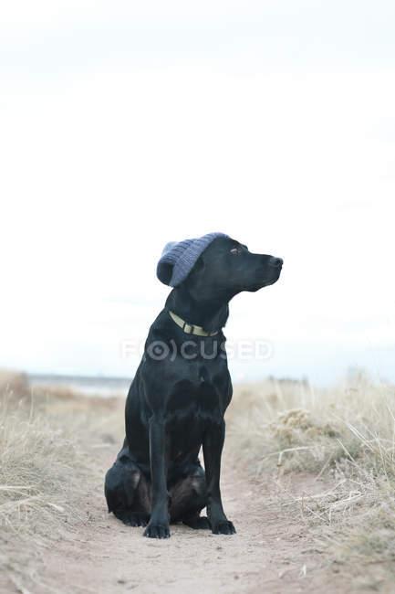 Black dog wearing knit cap — Stock Photo