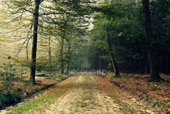 Dirty road in forest — Stock Photo