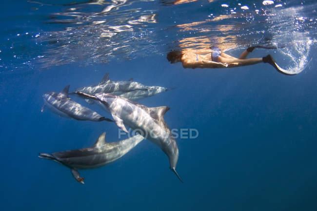 Гавайские дельфинов — стоковое фото