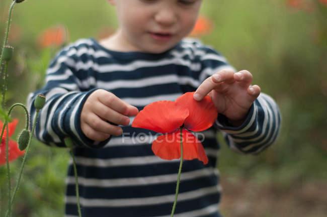 Boy touching poppy — Stock Photo