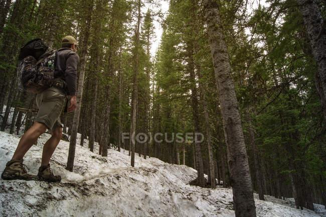Homme de randonnée à travers la forêt enneigée — Photo de stock