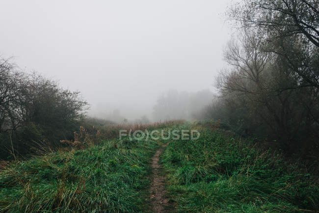 Footpath in fog at Forest — Stock Photo