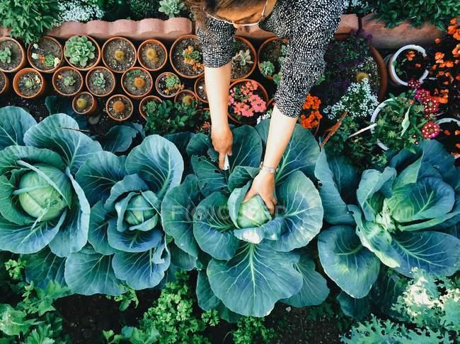 Femme travaillant dans le potager — Photo de stock
