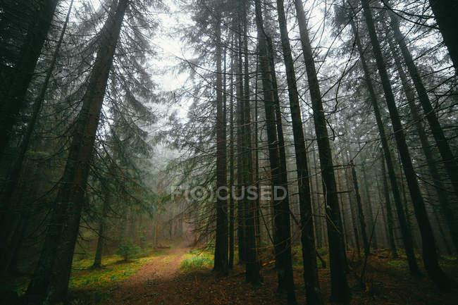 Пустой путь через лес — стоковое фото