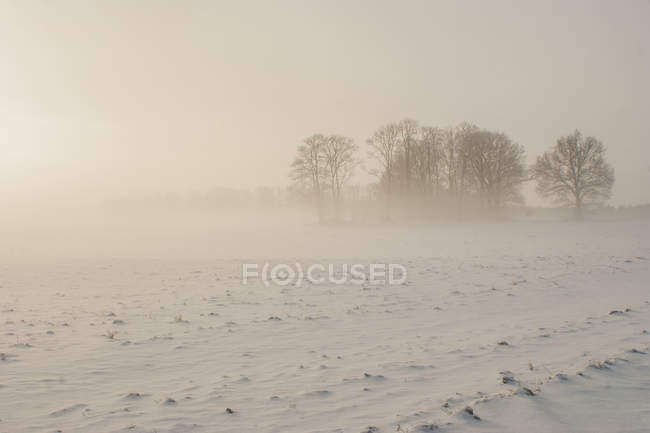 Bare trees in snowy field — Stock Photo