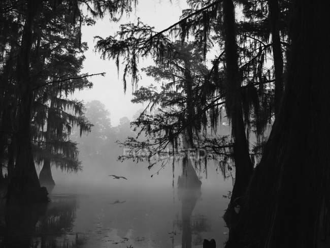 Nebel über Caddo Lake — Stockfoto