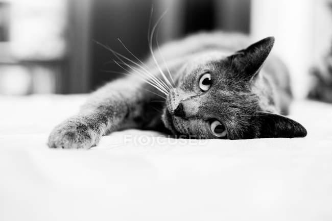 Gato deitado no sofá — Fotografia de Stock