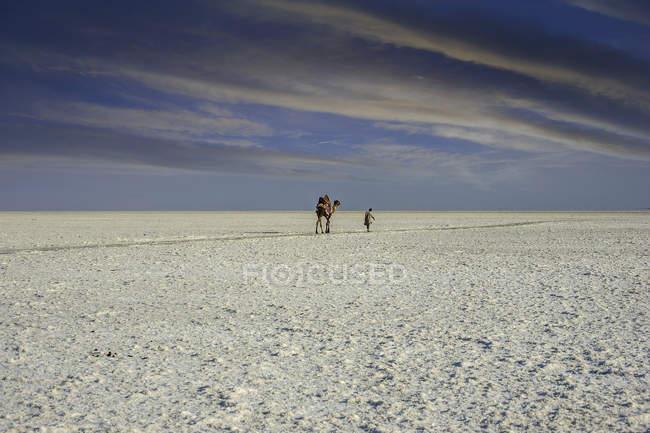 Camello y hombre caminando en el desierto de Kutch - foto de stock
