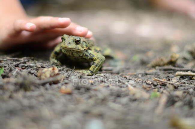 Ребенка тщательно трогательной жаба — стоковое фото