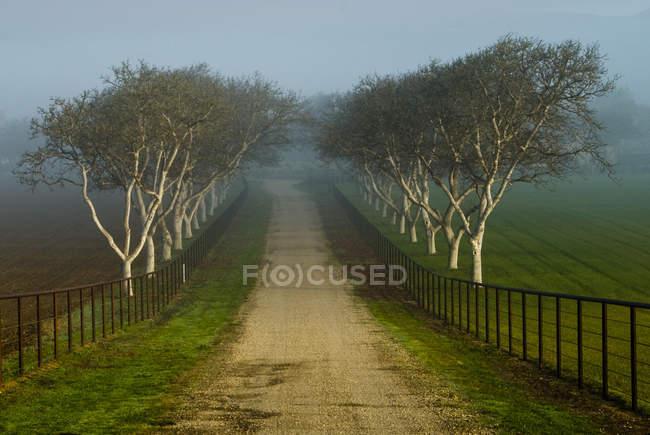 Calzada con árboles de carretera - foto de stock