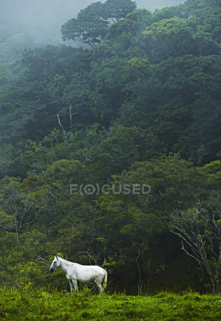 White horse in jungle — Stock Photo