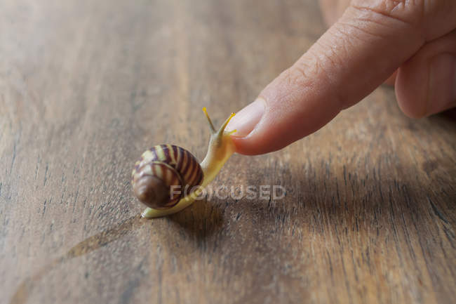Escargot rampant sur le doigt mâle — Photo de stock