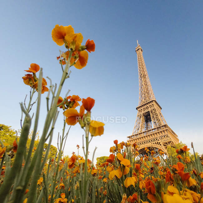 Eiffel Tower seen from down low through flowers — Stock Photo