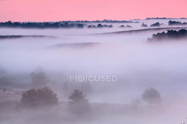 Parc national Veluwezoom dans le brouillard au coucher du soleil — Photo de stock