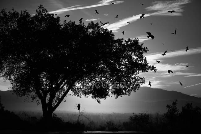 Uccelli e alberi sagomati — Foto stock