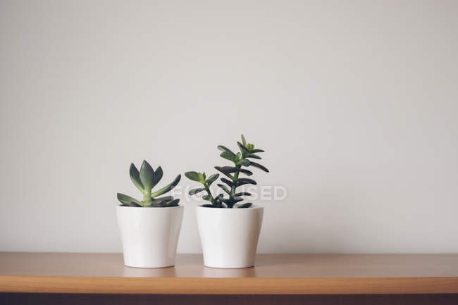 Succulents in plant pots — Stock Photo