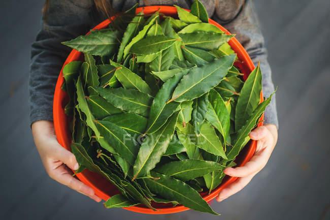 Girl holding bowl of bay leaves — Stock Photo