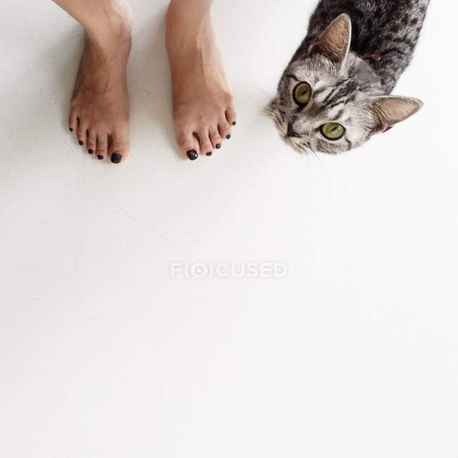 Woman standing next to a cat — Stock Photo
