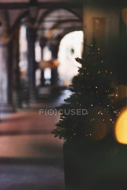 Christmas tree and lights — Stock Photo