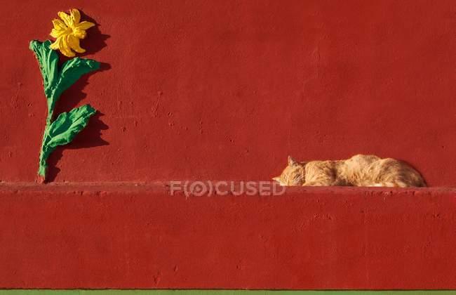 Gato durmiendo en una pared de ladrillo rojo - foto de stock
